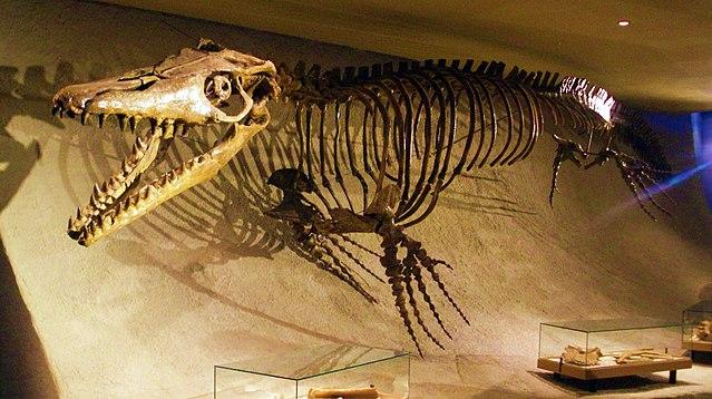 Mons Klint Mosasaurus