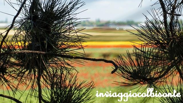 Itinerario in Olanda Family Friendly Campi di Tulipani