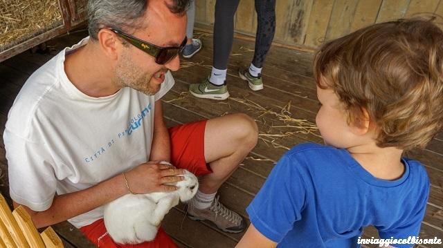 vacanze in fattoria - che bello il contatto quotidiano con gli animali!
